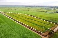 Te koop: Weelsedijk